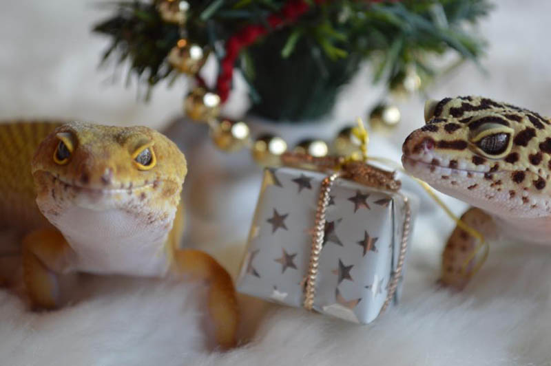 Gifts for Geckos!